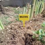 Δυόσμος Ποώδες και πολυετές αρωματικό φυτό. Τα φύλλα του, με το χαρακτηριστικό έντονο άρωμα, χρησιμοποιούνται στη μαγειρική, στην παρασκευή ροφήματος με τονωτικές ιδιότητες, σε άλλες φαρμακευτικές εφαρμογές και στην αρωματοποιία.