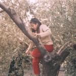Φ24 Δήμητρα μαζεύει ελιές