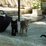 και φυσικά... τα γατάκια