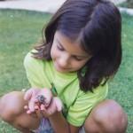 Φ_7 Δήμητρα χελωνάκι