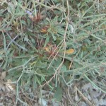 DSCN6522 crop