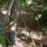 """Το μακρύ αυτό ξύλο χρησιμοποιείται σαν εργαλείο για να ρίχνεις καρύδια και το λένε στα Καλάβρυτα """"τέμπλα"""""""
