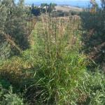 DSCN8746 crop
