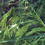 DSCN5967 crop