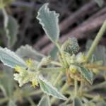 DSCN8017 crop