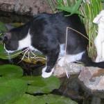 Κυνηγώντας βατράχια