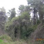 στο δάσος του κουβαρά