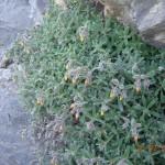 Ξυλόθρουμποι (Κρήτη)