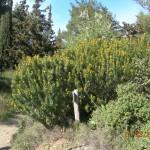στο δάσος της Καισαριανής