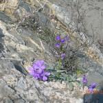 στα βράχια του Πανοράματος