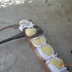 Παίρνουμε ένα ένα τα καρβέλια με το πανί και τα ρίχνουμε στο αλευρωμένο φτυάρι (φουρνόξυλο).