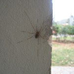 άλλη αράχνη
