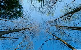 προοπτική, δέντρα