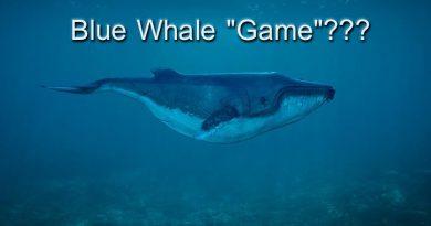 Η Εισαγγελία Πρωτοδικών Λευκάδας για το επικίνδυνο «Blue Whale»