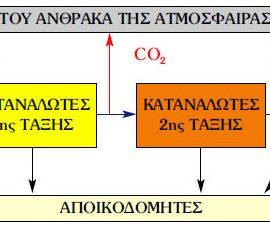 Ο κύκλος του άνθρακα