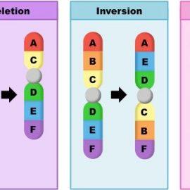 Βιολογία Γ΄ Γενικού Λυκείου – Χρωμοσωμικές ανωμαλίες